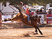 COCHISE COLLEGE RODEO 2018
