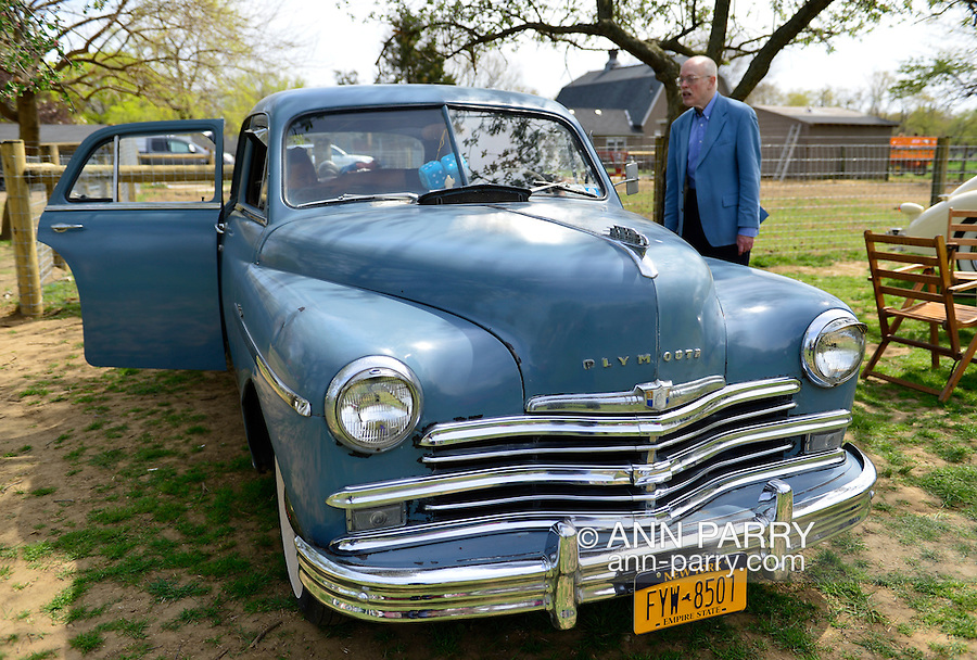 This gray 1949 Plymouth Deluxe is iat the Antique Auto Show, where New York Antique Auto Club members exhibited their cars on the farmhouse grounds of Queens County Farm Museum. A visitor was speaking with the car owner who was sitting inside the vehicle.