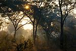 Miombo woodland, Kafue National Park, Zambia