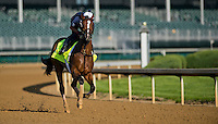 Normandy Invasion, trained by Chad Brown, during morning workouts for the Kentucky Derby at Churchill Downs in Louisville, Kentucky on April 30, 2013.