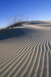 Beach sand dunes, Pea Island National Wildlife Refuge, the Outer Banks, North Carolina