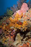 Reef Scenic.<br /> Boulders <br /> Grenadines