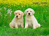 Marek, ANIMALS, REALISTISCHE TIERE, ANIMALES REALISTICOS, dogs, photos+++++,PLMP3043,#a#, EVERYDAY