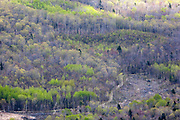 Forest during the spring months from the summit of Middle Sugarloaf Mountain in Bethlehem, New Hampshire USA. Timber Harvest along Forest Road 155 is in the foreground. This area was once part of the Zealand Valley Railroad, which was a logging railroad in operation from 1884-1897.