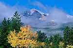 Fall color from aspen (Populus tremuloides) brighten up the conifers with Longs Peak in the background in Rocky Mountain National Park, Colorado.