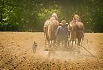 Amishman planting corn. Horsedrawn. Firestone Road, Huron County, Ohio