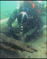 BNPS.co.uk (01202) 558833<br /> Picture: Bournemouth Universtiy<br /> <br /> **Please use byline**<br /> <br /> Marine archeologists inspect he wreck of the Dutch trading ship on the seabed near Poole, Dorset.<br /> <br /> A spectacular carving of the face of a moustachioed warrior today greeted archeologists as they raised part of a huge 17th century ship wreck in the English Channel. The intricate work of art was engraved into the 28ft long rudder section of the Dutch wooden trading ship that sunk off Poole, Dorset, in 1628. Its accidental discovery by a dredger led to six years of underwater investigations which prompted experts to hail the find as the most significant since the Mary Rose.