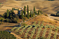 Belvedere House, Olive trees, and vineyards at sunset, San Quirico d'Orcia, Tuscany, Italy
