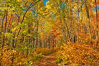 Trail in autumn splendor<br />Aubry Falls Provincial Park<br />Ontario<br />Canada