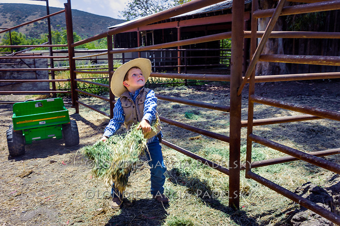 Little cowpoke throwing hay to the animals, San Luis Obispo, California