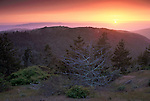 Sunset over pine forest on Santa Cruz Island, Channel Islands, California