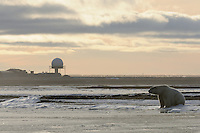 A polar bear rests along the shoreline of a barrier island outside Kaktovik, Alaska, on the northern edge of ANWR, waiting for the Arctic Ocean to freeze. The town's most prominent feature, a military radar site, is visible in the background.