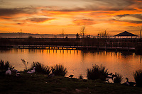 Sunset at the San Lorenzo, California, community park known as The Duck Pond.
