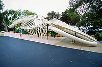 skeleton of blue whale, Balaenoptera musculus, Santa Barbara Museum of Natural History, California