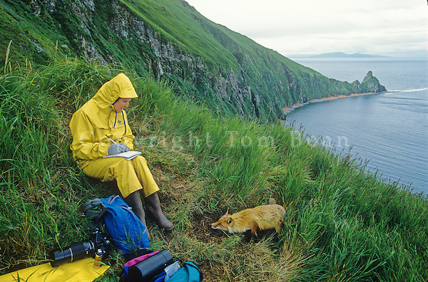 Writer, Susan Lamb, observes a red fox on Round Island in Bristol Bay at Walrus Islands State Game Sanctuary, Alaska, AGPix_0707.