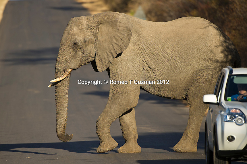 July 18, 2012: Zukuza Drive Kruger National Park in South Africa