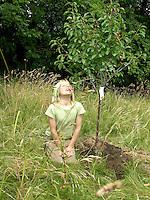 Kirschen naschen, Kind, Junge pflanzt einen Obstbaum, Kirschbaum auf einer Wiese, Streuobstwiese, nascht die ersten Kirschen direkt von seinem neu gepflanzten Baum, Prunus avium, Süßkirsche, Süsskirsche, Kirsche, Kirschbaum, Cherry