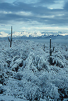A winter seen in the Sonoran Desert, from Saguaro National Park east of Tucson Arizona looking north.