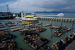 Pier 39 with sea lions on docks with people watching and tour boats, San Francisco, California USA
