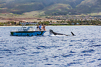 Tourists on a whale-watching boat have a close encounter with a humpback whale off the coast of Maui.