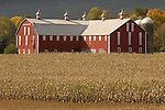 Red barn and fall corn, Union County, Pennsylvania. Owned by Ben Friesen, Red Ridge Road, Lewisburg, PA.