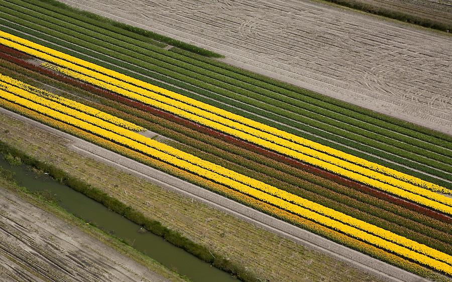 Nederland, Zuid-Holland, Hillegom, 16-04-2008; bollenstreek, percelen met bollen, gedeeltelijk in  bloei (narcissen en hyacinten); zandgrond, bollenveld, geestgrond, bloementeelt, bollenteelt, narcis, bol, hyacint*, patroon, ritme, diagonaal. schuin, kleur, abstract; aerial photo, bulbs, flower bulb, flowerbed , bulbfields, bloom, flowering time, toerism, attraction..luchtfoto (toeslag); aerial photo (additional fee required); .foto Siebe Swart / photo Siebe Swart