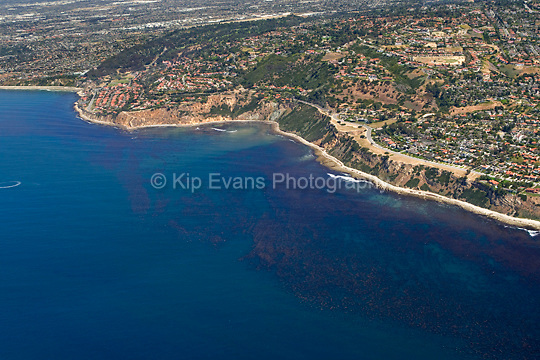 Aerial view looking east/northeast on Palos Verdes with a productive kelp forest in the foreground along the coast.
