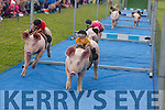 The  Ballyheigue pig Race on Thursday