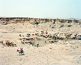 ERITREA, Foro, Bedouin herders tend to their livestock in the desert