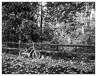 NEW YORK, NY - NOVEMBER: Photograph of bicycle under leaves in Central Park at 102st on November of 2007 in New York, New York. Photo Credit: Thomas R. Pryor