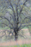 Soft focus abstract tree, Cades Cove, Great Smoky Mountains National Park, Tennessee