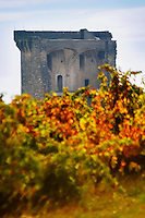A view of the ruined chateau, the Pope's summer palace over the vineyards. Chateauneuf-du-Pape Châteauneuf, Vaucluse, Provence, France, Europe Chateauneuf-du-Pape Châteauneuf, Vaucluse, Provence, France, Europe