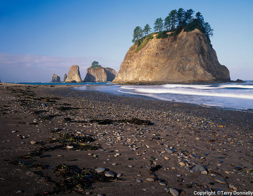 Olympic National Park, WA <br /> Morning sun on seastacks and exposed pebbled sand at low tide, Rialto Beach