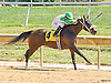 winning at Delaware Park on 9/15/16