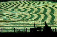 Farmer on tractor views his field of new mown hay cut into undulating curves  Missouri USA