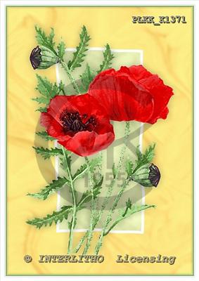 Kris, FLOWERS, paintings, PLKKK1371,#f#