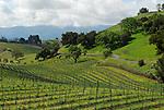 Vineyard. Los Olivos