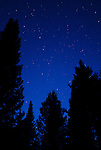 The constellation  Big Dipper is seen between Lodge Pines in Colter Bay, Grand Teton National Park.