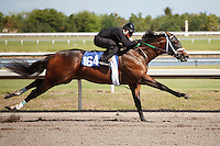 #164Fasig-Tipton Florida Sale,Under Tack Show. Palm Meadows Florida 03-23-2012 Arron Haggart/Eclipse Sportswire.