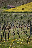 Europe/Europe/France/Midi-Pyrénées/46/Lot/Env de Luzech: Vignoble du Vin de Cahors AOC