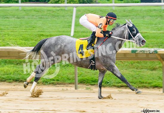 Terri's Pass winning at Delaware Park on 7/30/16