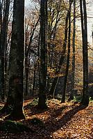 Europe/France/Limousin/23/Creuse/Env Guéret: Forêt de Chabrières