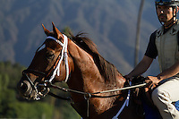 Smiling Tiger coming off the track for trainer Jeff Bonde at Santa Anita Park in Arcadia California