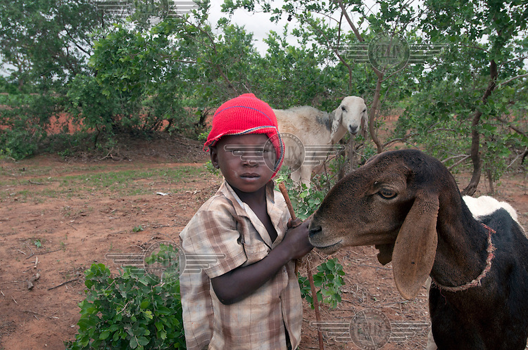 4-year-old Yanoussa Mamane looks after some goats in a field while his father plants peanuts. A drought in southern Niger has affected up to 8 million people.