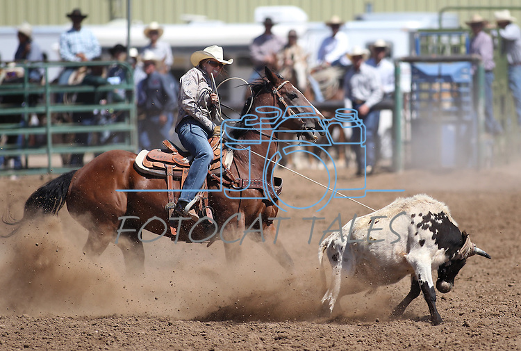 Cari Norcutt competes in the women's steer stopping event the Minden Ranch Rodeo on Sunday, July 24, 2011, in Gardnerville, Nev. .Photo by Cathleen Allison