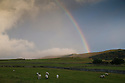 20/08/14 <br /> <br /> A rainbow at first light over Rushup Edge follows a cold night in the Derbyshire Peak District.<br /> <br /> All Rights Reserved: F Stop Press Ltd. +44(0)1335 300098   www.fstoppress.com.