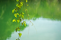 Jungle pond and leafs, Palawan, Philippines