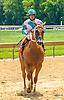 Rosolio at Delaware Park on 7/20/16