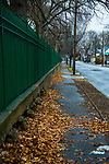 BROOKLYN - January 2, 2017:  Leaves collect along the gate around Holy Cross Cemetery at the beginning of the week.