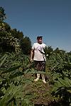 Venezia - Isola delle Vignole. Leone, farmer.<br /> Venice - Vignole Island. leone, farmer.